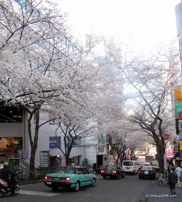 Quick check of Sakura