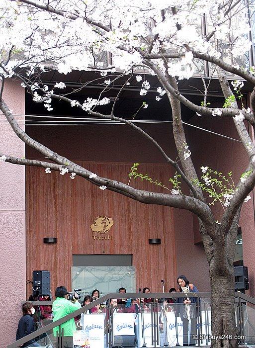 A concert under the Sakura feeling