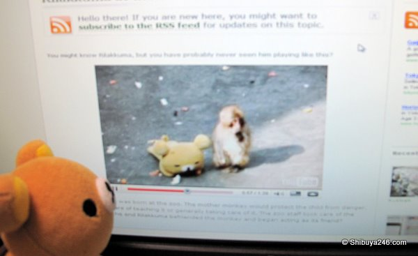 My Rilakkuma was not amused !