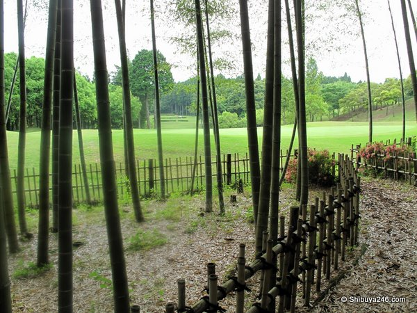 There was a really nice bamboo feature here behind the green