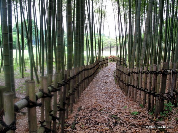 Another nice shot of the bamboo walk. Quite an unusual feature for a golf course