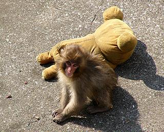monkey-rilakkuma