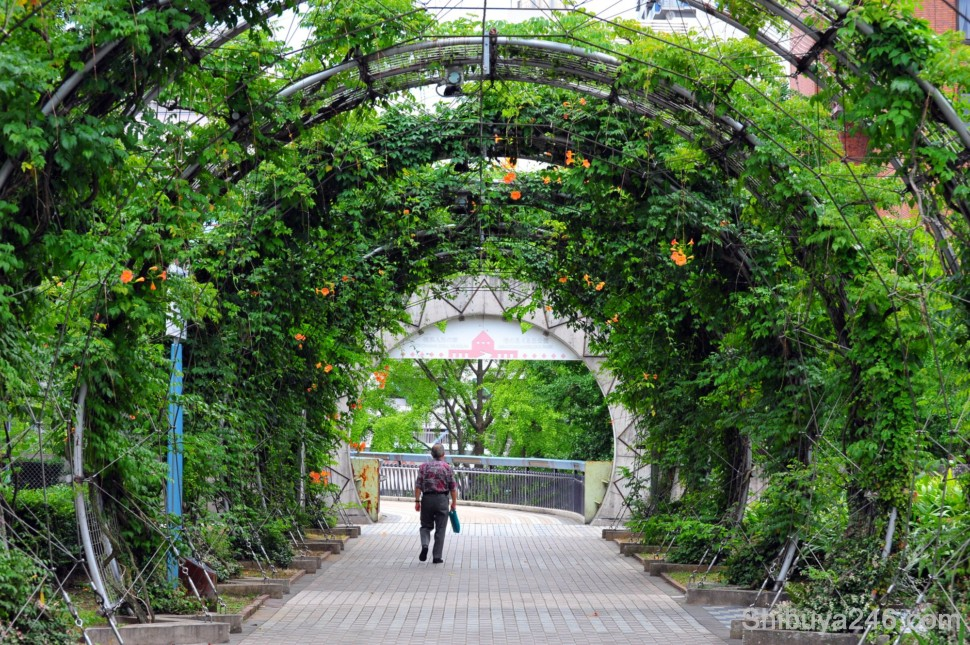 There is plenty of greenery in the parks and pathways in Yokohama, keeping it cool even on a hot summers day