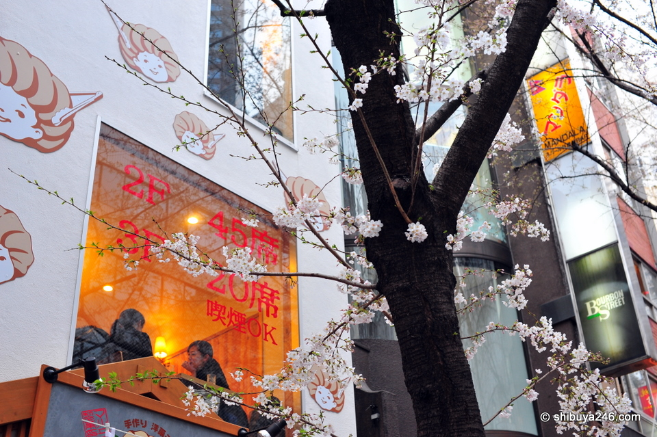 Nice look back at the cafe through the Sakura tree.