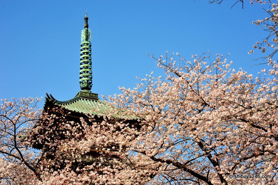 Ueno Park, Sakura Japan