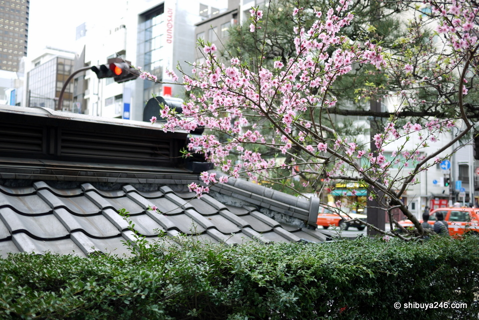 This public toilet in Hamamatsucho has a beautiful traditional tile roof as well as some nice greenery and sakura to give it a lift.