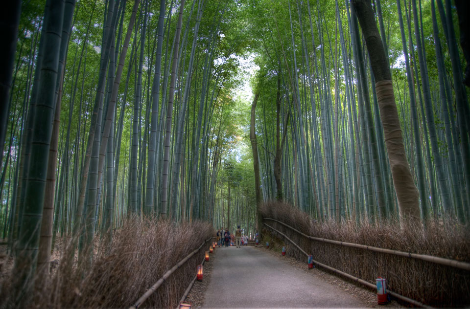 Bamboo Walk in Arashiyama
