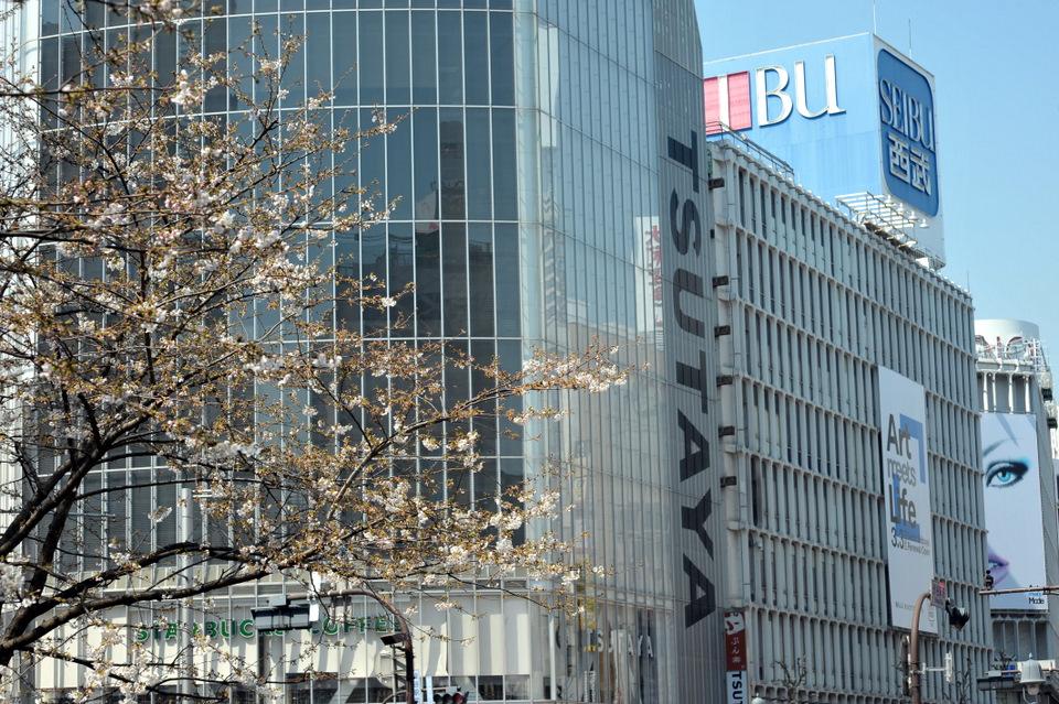 Shibuya Sakura
