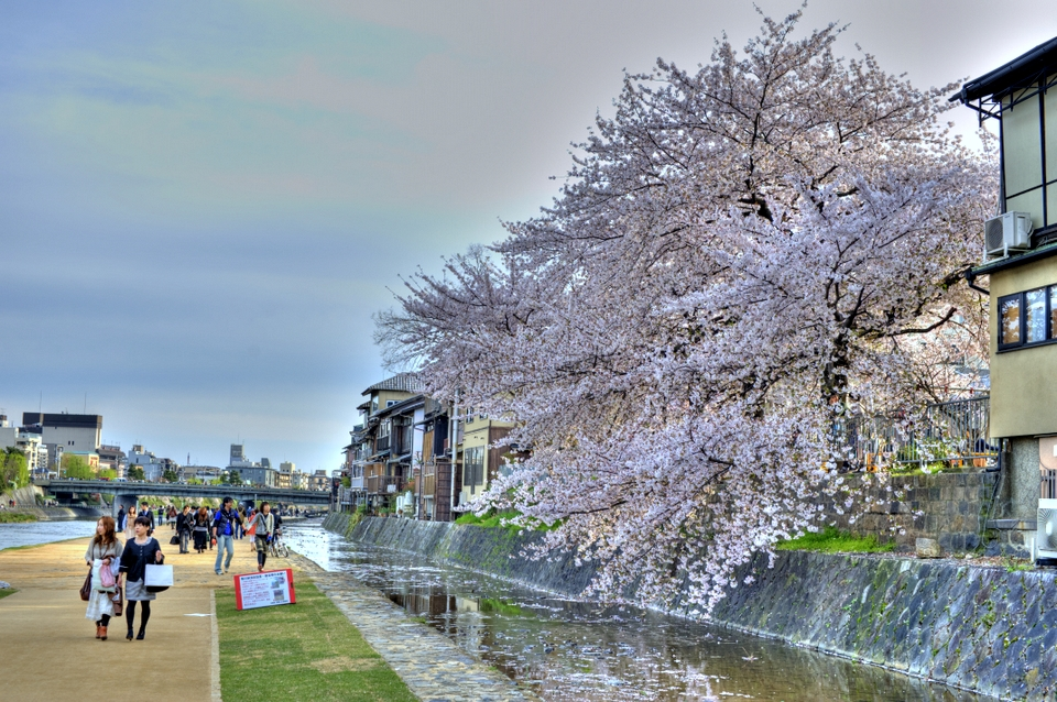 A touch of HDR with the Sakura on