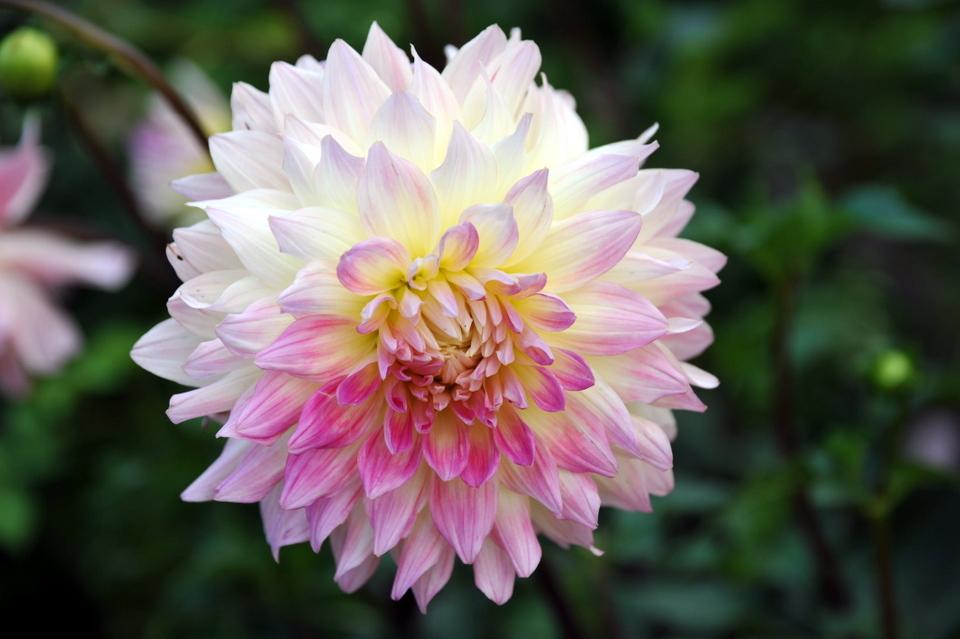 Mount Hiei Flowers