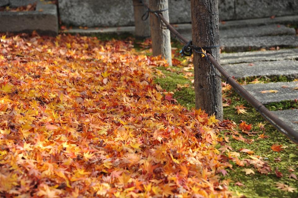 Eikando Autumn