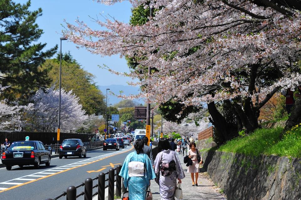 Kimono with Sakura