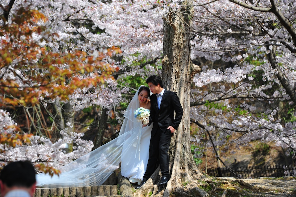Sakura wedding
