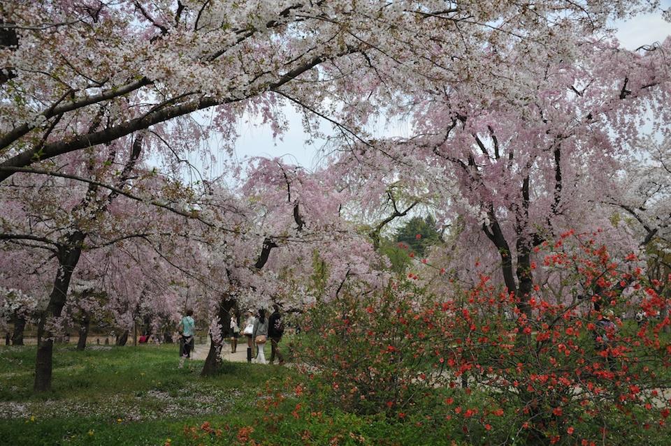Kyoto Botanic Gardens