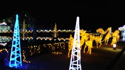 Xmas Lights in Botanical Gardens